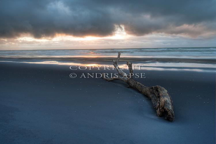 Log on black sand beach . Taranaki Region. New Zealand.