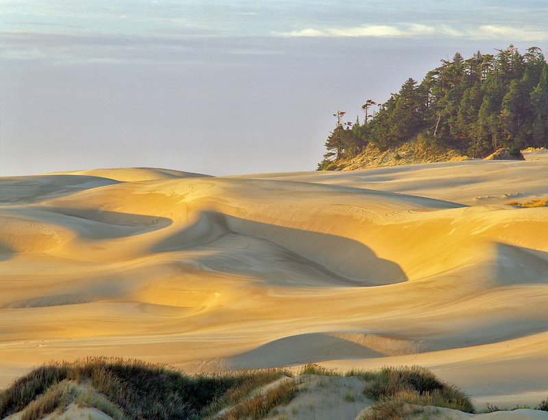 Sandunes at sunset. Oregon Dunes National Recreational Area.