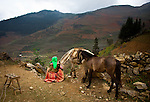 A Hmong hill tribeswoman tends to her horses.  Tea grows on the hillsides in front of her.