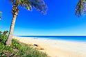 Palm tree on Cable Beach. Broome. Western Australia.