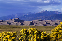 Great Sand Dunes national park and yellow flowers in Colorado, USA