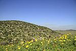 Israel, Shephelah, Tel Shocha overlooking Haelah valley