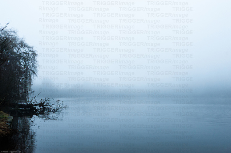 A foggy morning at Lost Lagoon.