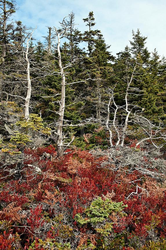 Maine coastal landscape.
