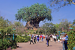 Tree Of Life Disney Animal Kingdom