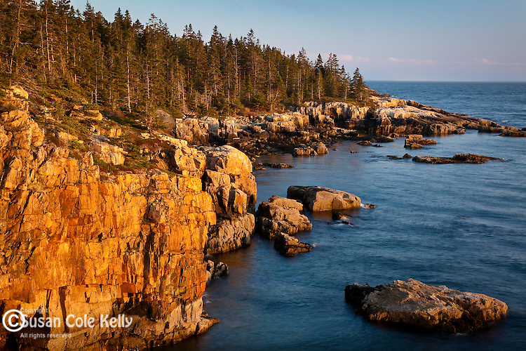 Golden light on the rocky cliffs at Raven's Roost, Acadia National Park, ME, USA