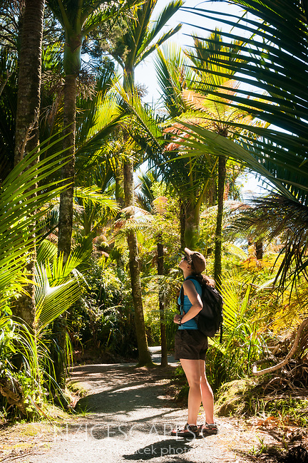 Female hiker admiring Nikau Palms on track alongside of Pororari River in Punakaiki, Paparoa National Park, Buller Region, West Coast, New Zealand, NZ