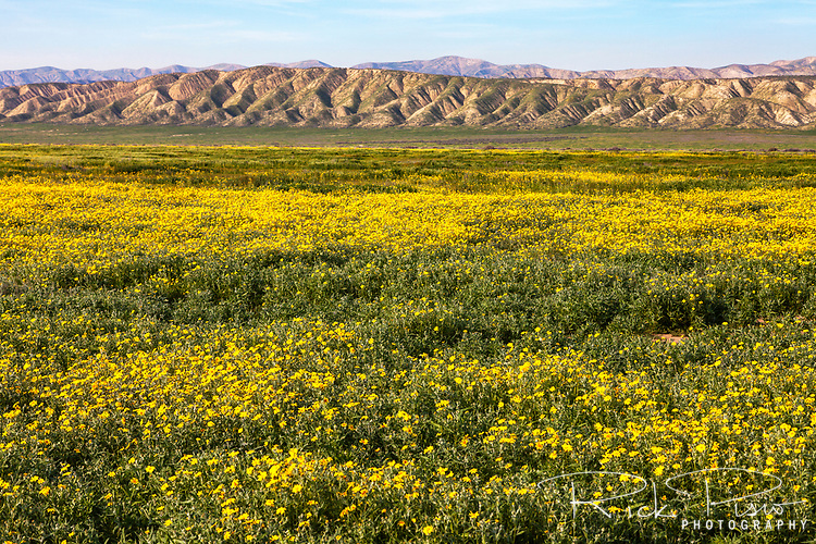 Wildflowers bloom near the Van Matre Ranch at the Carrizo Plain National Monument.