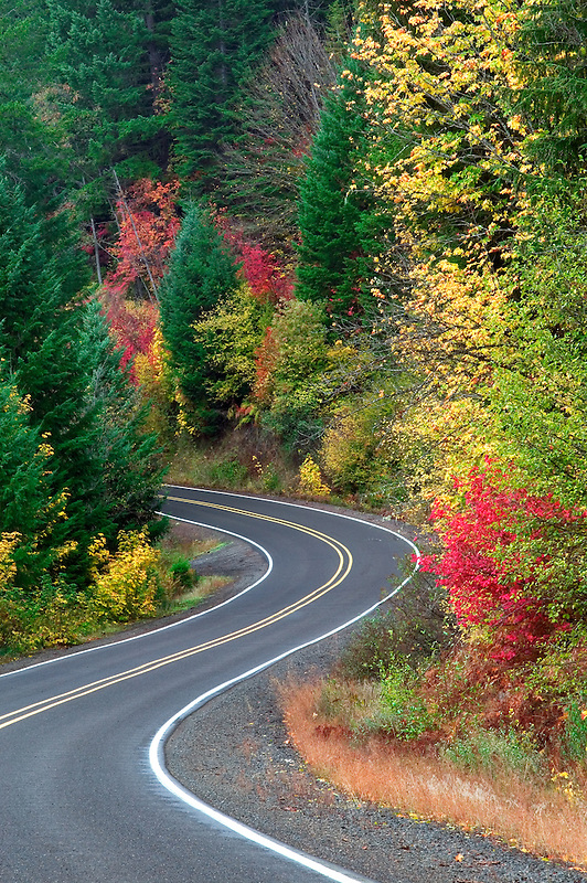 Prospect Butte Falls Hwy. with fall color.