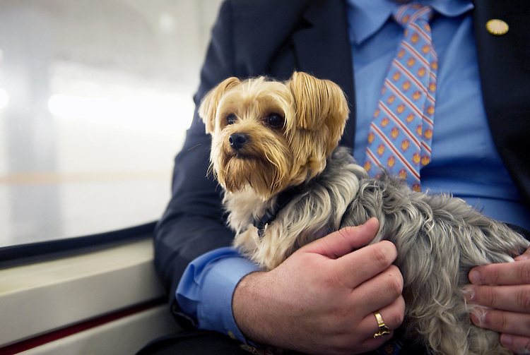 UNITED STATES - DECEMBER 6: Staffers escort Sen. Scott Brown's dog Koda, riding the subway from the Capitol.  (Photo By Chris Maddaloni/CQ-Roll Call).