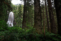 Hemlock and spruce trees on central Chichagof Island.  Photographs of old growth forest and a hike through the alluvial forest.  Pictures of spruce trees--approximately 200 years old and a 100 foot waterfall in the Tongass National Forest.
