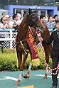 Horse Racing : Kansai Telecasting Corp. Sho Rose Stakes