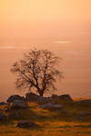 Oaks in the Tehachapi Foothills overlooking farm land  in the Southern San Joaquin Valley near Arvin in the setting sun