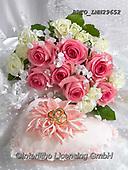 Alfredo, FLOWERS, BLUMEN, FLORES, photos+++++,BRTOLMN29652,#f#, EVERYDAY