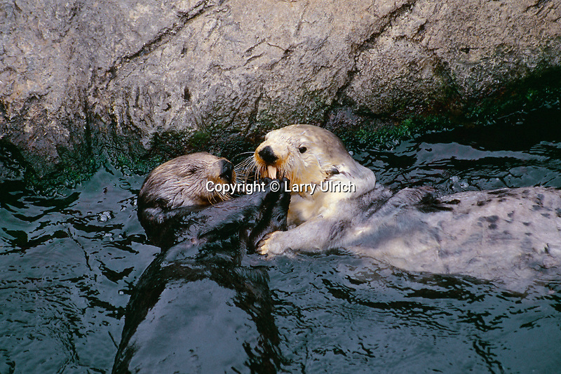 Sea Otter Tank<br />