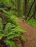 Elowah Falls Running