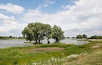 Nederland Groot-Ammers 2017.   Dijk bij rivier de Lek.  Foto Berlinda van Dam / Hollandse Hoogte