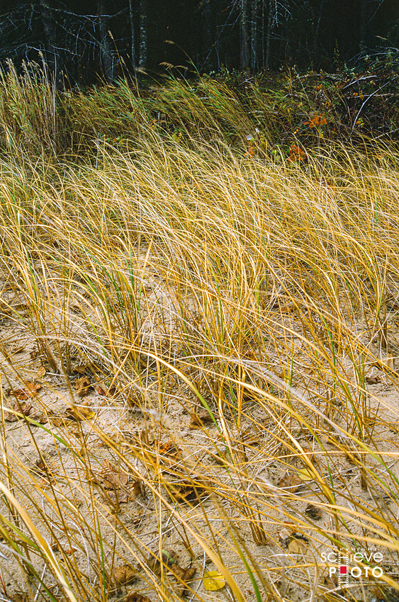 Beach grasses at Newport State Park in Door County.