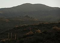 Saguaro cacti  and rolling hills in Southern Arizona.