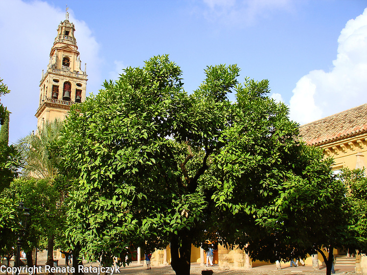Torre del Alminar - view from Patio de los Naranjos - Cordoba, Spain. This is part of the Mezquita - great mosque and since XVI century a cathedral.