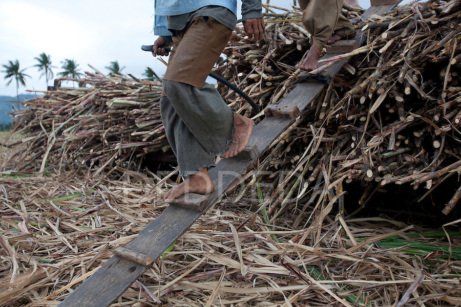 Men work barefoot as they harvest sugar cane near Bias City on Negros, Philippines.