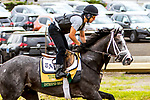 JUNE 05, 2019 : Intrepid Heart morning workouts for Belmont Stakes contenders at Belmont Park, on June 5, 2019 in Elmont, NY.  Sue Kawczynski_ESW_CSM