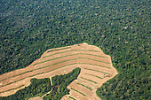 Para State, Brazil. Newly cleared land for growing soya in area of rainforest near the Tapajos river.