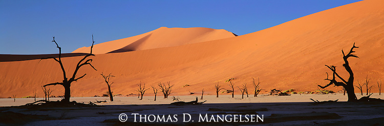 A grove of dead camelthorn trees in Sossusvlei National Park, Namibia.