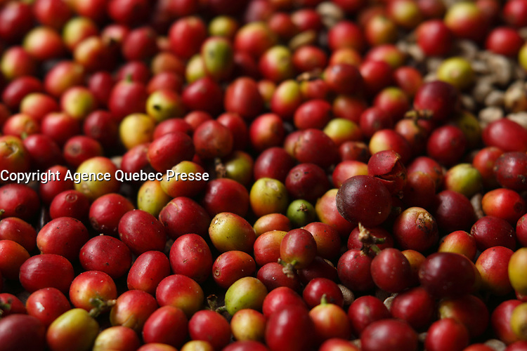 Doi Inthanon National Park<br /> , coffee beans