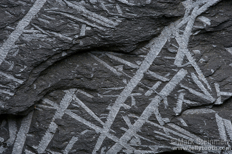 """Monograptus sp, a graptolite fossil, in black shale. Silurian. Cliffs of Veryac'h, SW of Cameret, Brittany, France. Graptolites are an extinct class of animals in the Hemichordata phylum. The fossils represent the skeletal sheath of a colonial, soft-bodied marine invertebrate which was free-floating. The word graptolite means """"writing rocks"""" due to the resemblance to hieroglyphs. They are an important index fossil for dating rocks from the Paleozoic Era."""