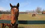 Yearlings in a paddock at Overbrook Farm in Colts Neck, New Jersey.