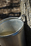 Traditional tap on maple tree for producing maple syrup