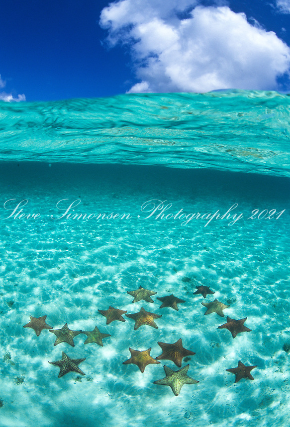 Split level view of Pincushion starfish<br />