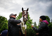LOUISVILLE, KY - MAY 03: Trainer, Richard Mandella drys off his filly Paradise Woods after getting a bath at Churchill Downs on May 03, 2017 in Louisville, Kentucky. (Photo by Alex Evers/Eclipse Sportswire/Getty Images)