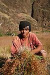 jeune agriculteur de la Caldeira du volcan Fogo. Ile de Fogo