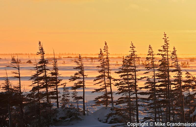 Hudson Bay coastline. Subarctic.<br />Churchill<br />Manitoba<br />Canada