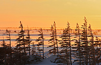 Hudson Bay coastline. Subarctic.<br />