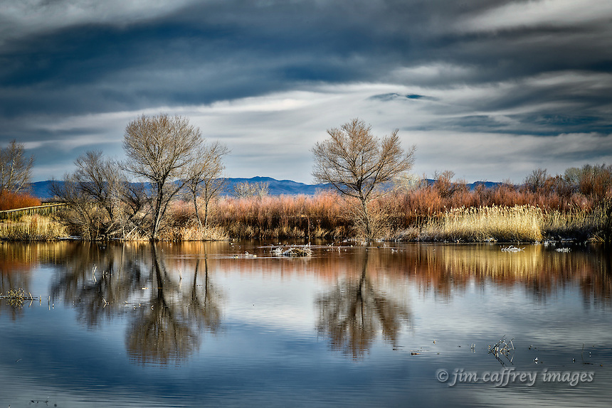 Elm trees are reflected in a rippled pond at Bosque del Apache NWR.