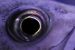 Eye of a fish staring at you. Ever get the feeling you are being watched? Perhaps your worst nightmare