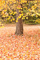 Fall color in the Hiawatha National Forest of Michigans Upper Peninsula near Munising Michigan.