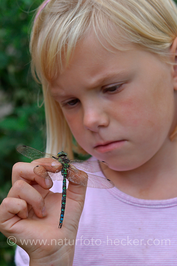 Mädchen, Kind mit Libelle in der Hand, Blaugrüne Mosaikjungfer, Aeshna cyanea, blue-green darner, southern aeshna, southern hawker
