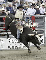29 Aug 2004: Bull Rider Jesse Belyea rides the bull during the PRCA 2004 Extreme Bulls competition in Bremerton, WA.