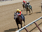 Classy John (no. 3) wins Race 1, Aug. 25, 2018 at the Saratoga Race Course, Saratoga Springs, NY.  Ridden by  Brian Hernandez, Jr., and trained by Dallas Stewart, Classy John finished 6 lengths in front of Puttingtheglassdown(No. 5).  (Bruce Dudek/Eclipse Sportswire)