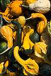 Detail of several varities of squash