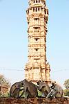 Hanuman Langurs near Vijay Stambh, Chittorgargh Fort, Rajasthan