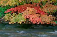 Sugar maple <br /> Brandywine Creek<br /> Cuyahoga Valley National Park<br /> Summit County,  Ohio