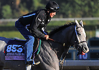 Street Sailing, trained by William Helmbrecht, trains for the Breeders' Cup Juvenile Fillies Turf at Santa Anita Park in Arcadia, California on October 30, 2013.