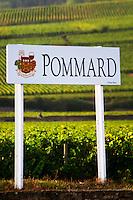 vineyard pommard cote de beaune burgundy france