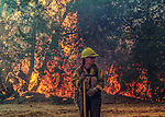 August 20, 1992 Angels Camp, California -- Old Gulch Fire— US Forest Service firefighter stands watch on Sheep Ranch Road.  The Old Gulch Fire raged over some 18,000 acres, destroying 42 homes while threatening the Mother Lode communities of Murphys, Sheep Ranch, Avery and Forest Meadows.
