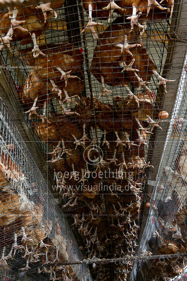 NIGERIA, Oyo State, Ibadan, village Ilora, egg layer hen keeping in cages / Eierproduktion, Legehennenhaltung in Kaefigen